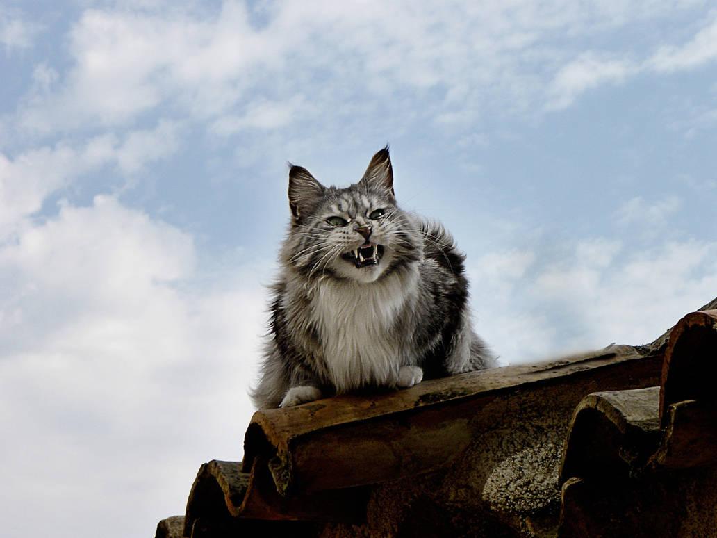 ..... My cat 2