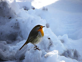 Winter bird by Flore-stock