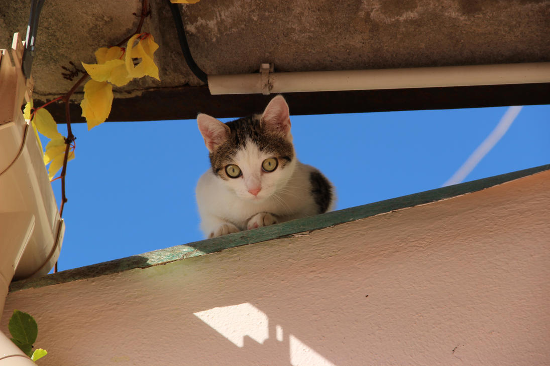 Le chat gouttieres 3 by Flore-stock