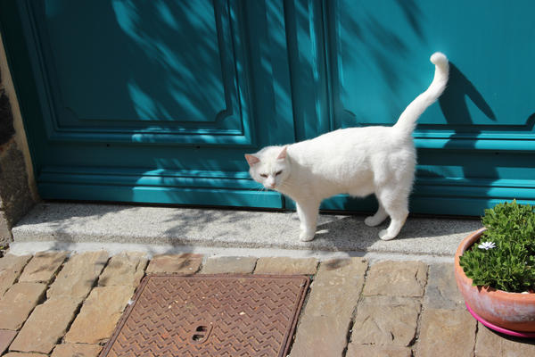 chat a la porte by Flore-stock