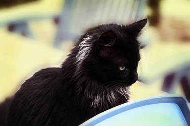 Cat by PtiteCocci