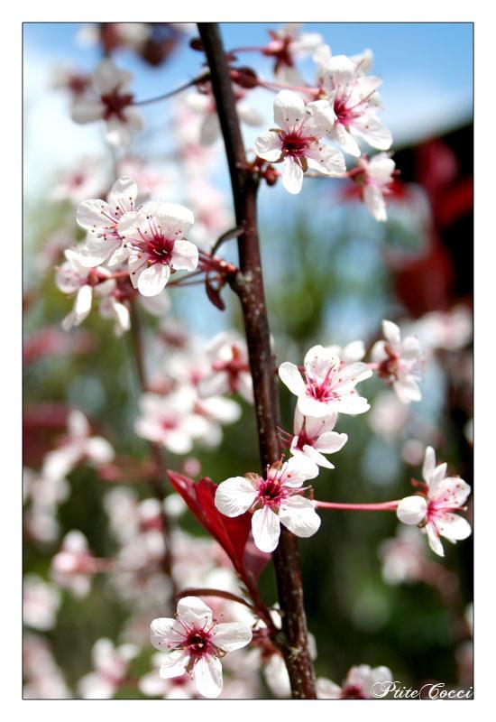 WHite Flowers 2 by PtiteCocci