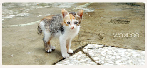 Baby cat 0.2 by wakhaa