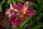 Wild orchids by loveyunki