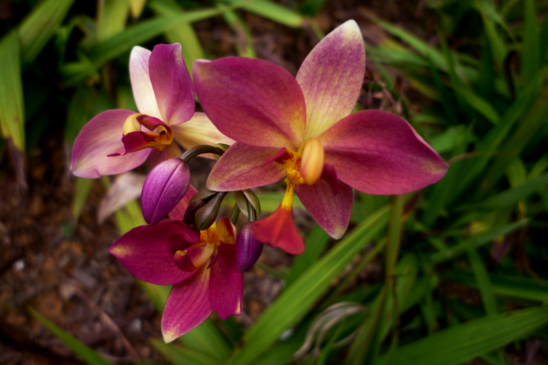 images of orchids in the wild  all about orchid and tulip flowers, Beautiful flower