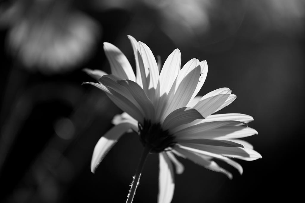 Black and White and Yellow by Matus76