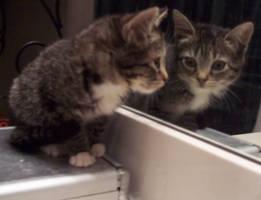 Kitten by Samantha3089