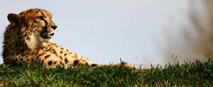 Cheetah boy again