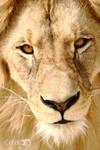 King Leon watching you