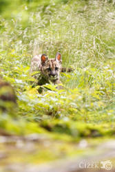 Little hunter by Lion-Redmich