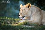 Evening bath by Lion-Redmich