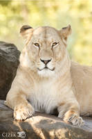 Queen by Lion-Redmich