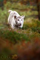 Run, kitty, run by Lion-Redmich