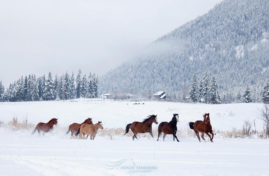 Snowy Fields by kalicobay