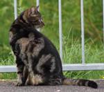 Cat stock by DeepOakTrails
