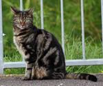 Cat stock 1