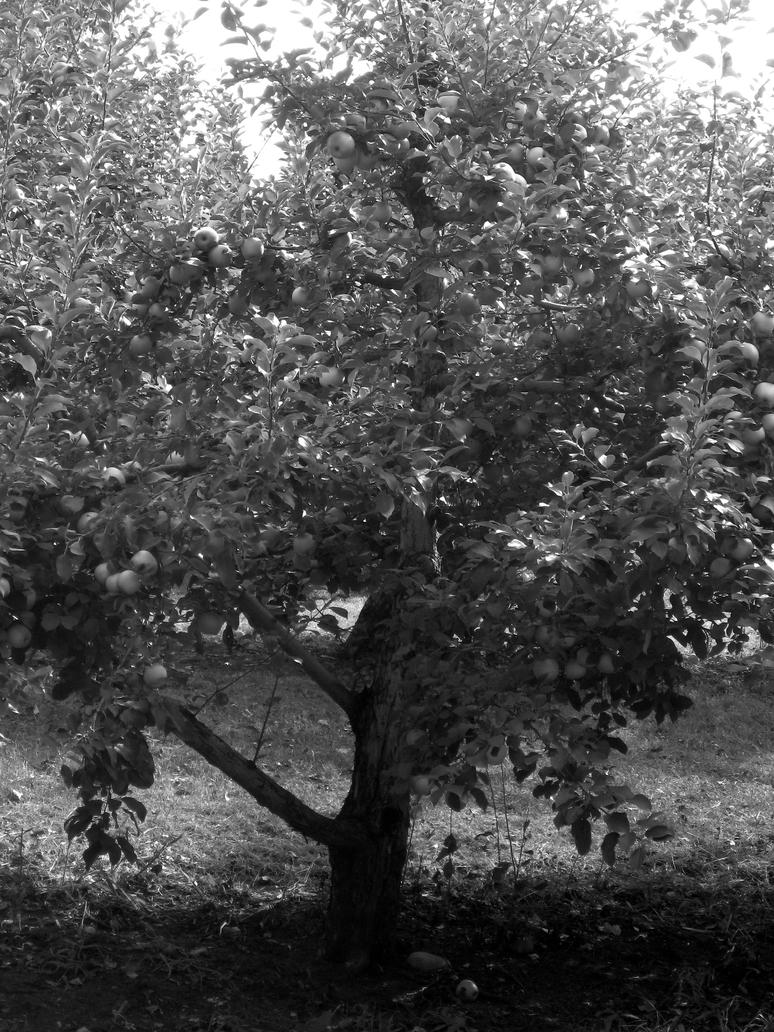Orchard - Black and White Apple tree by punna-girl on ...
