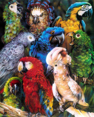 Parrots by DanMcManis
