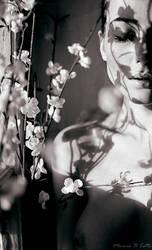 Sun Shadows by MecuroBCotto