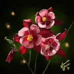 Columbine Flowers (Study)
