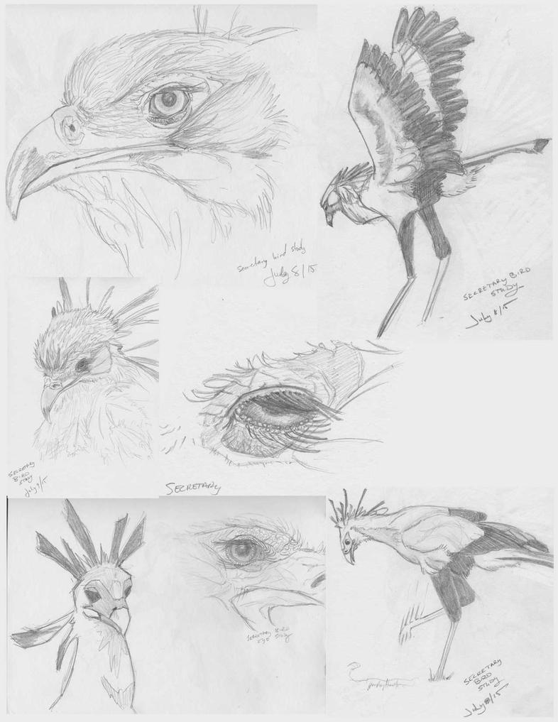Sec-bird-studies01 Halfsize by kendrin