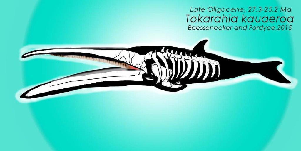 Tokarahia kauaeroa skeletal preview by DinoGuy777