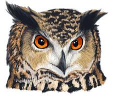 Eurasian Eagle Owl by AMEcco