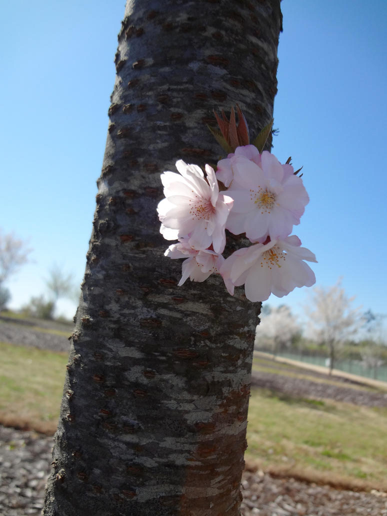 Mistletoe Blossoms by FarisKalin