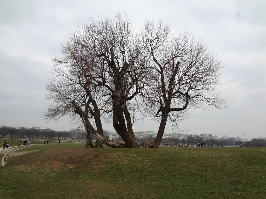 DC Tree by FarisKalin