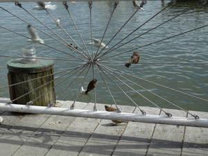 Asterisk Birds