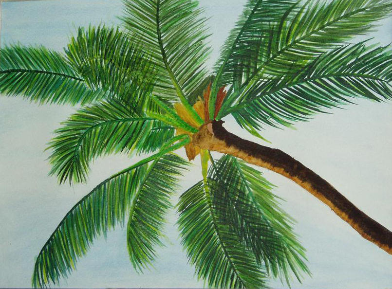 palm tree watercolor - photo #15