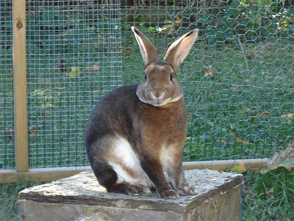 Rufus The Rabbit by SJRT