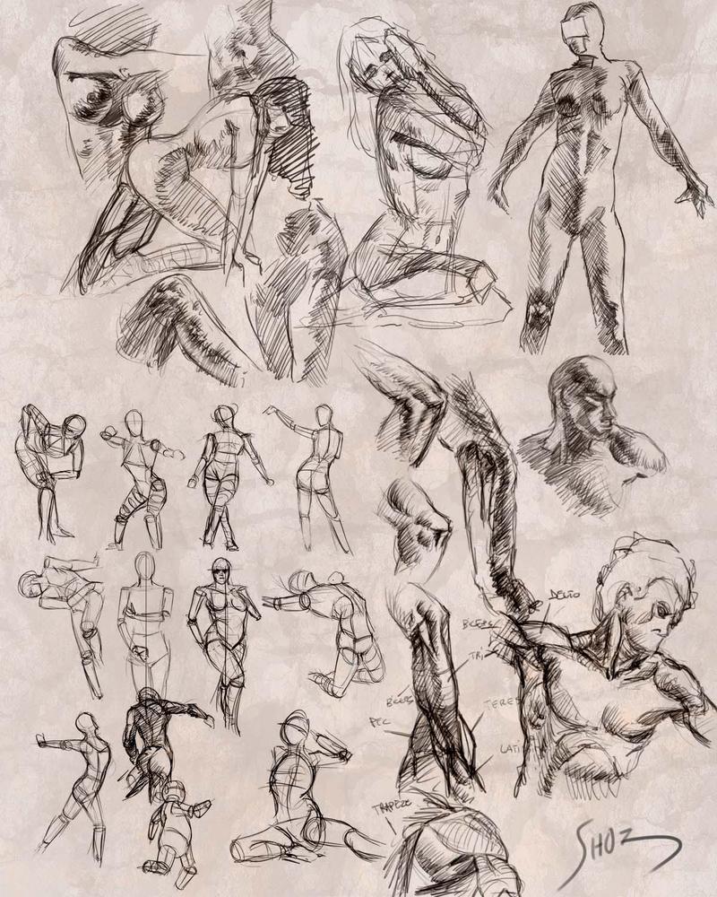 Luxury Anatomy And Art Festooning - Human Anatomy Images ...