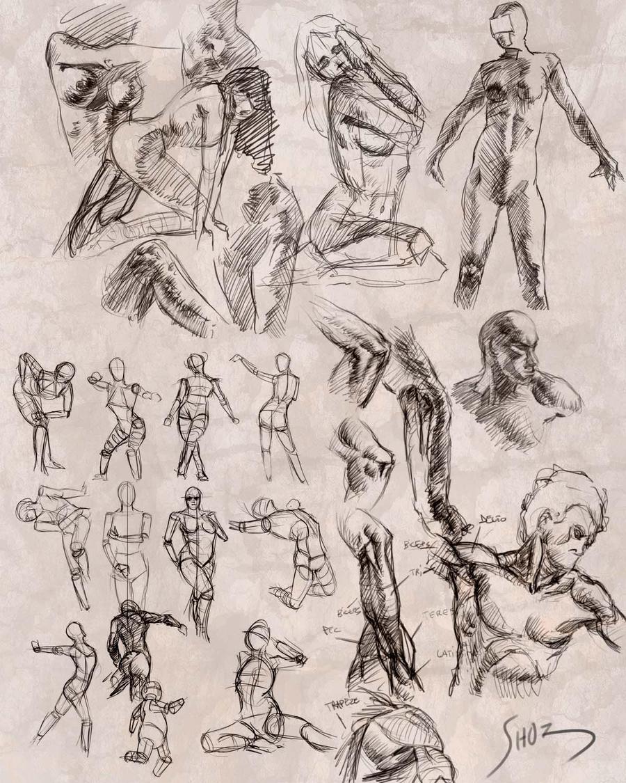 Gesture and anatomy studies by ShoZ-Art on DeviantArt