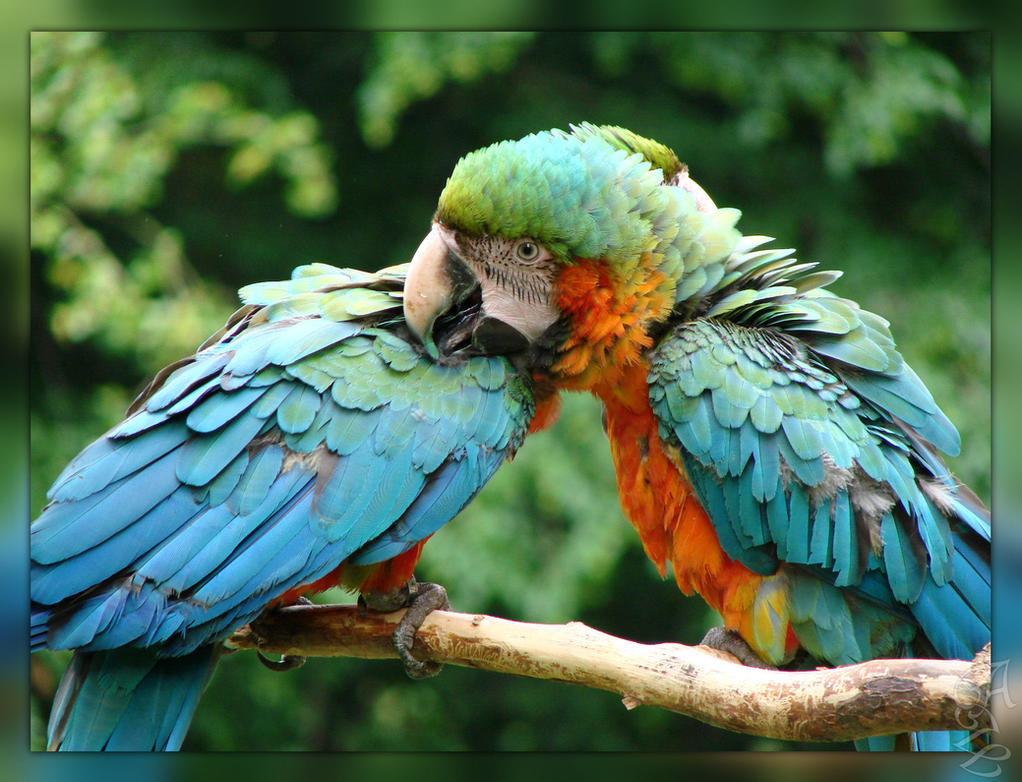 Macaws_2 by 123LicenseToPaint