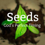 Seeds: God's Perfect Timing