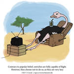 A Fantastically False Fact About Ostriches by Zombie-Kawakami