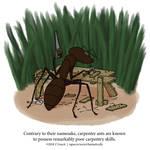 A Fantastically False Fact About Carpenter Ants