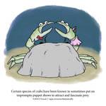 A Fantastically False Fact About Crabs