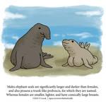 About Elephant Seals by Zombie-Kawakami