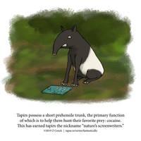 A Fantastically False Fact About Tapirs