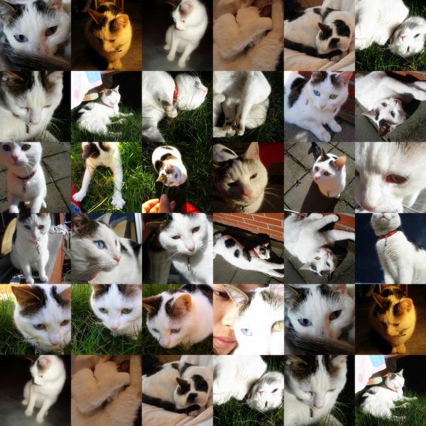 Collage: Akita by Chiiichiii