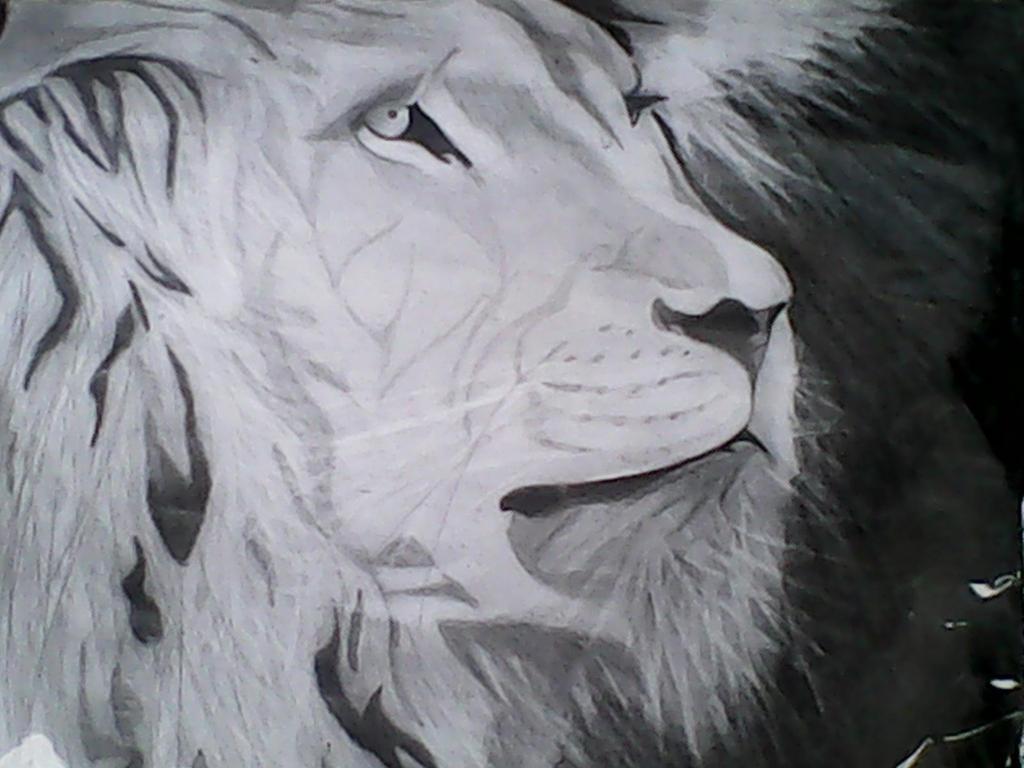 Lion by michaelbryan