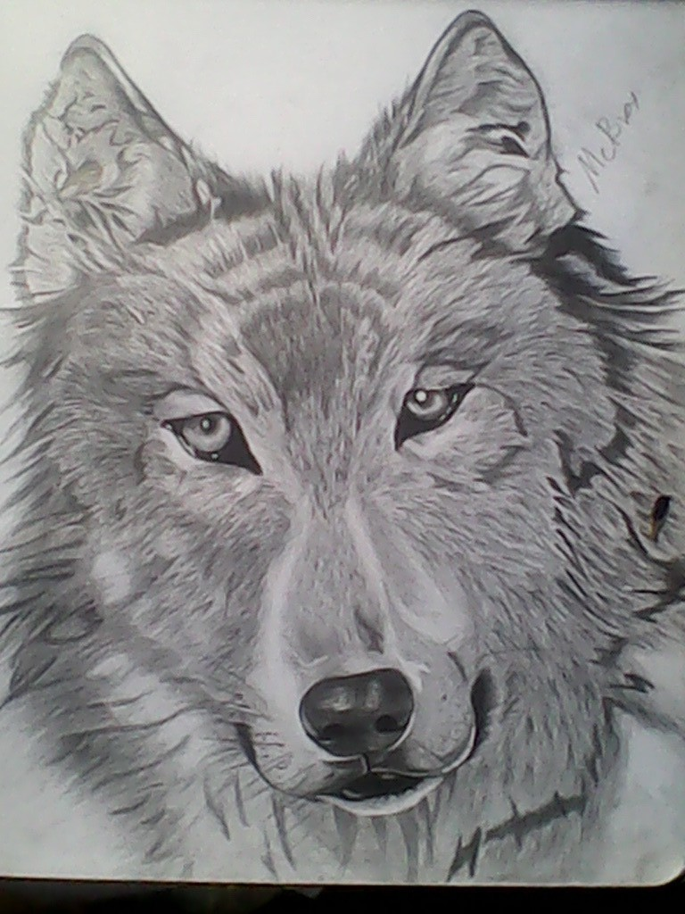 Wolf by michaelbryan