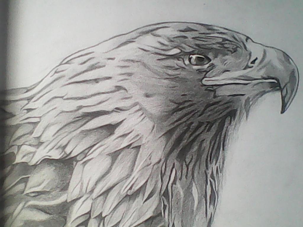 Eagle by michaelbryan