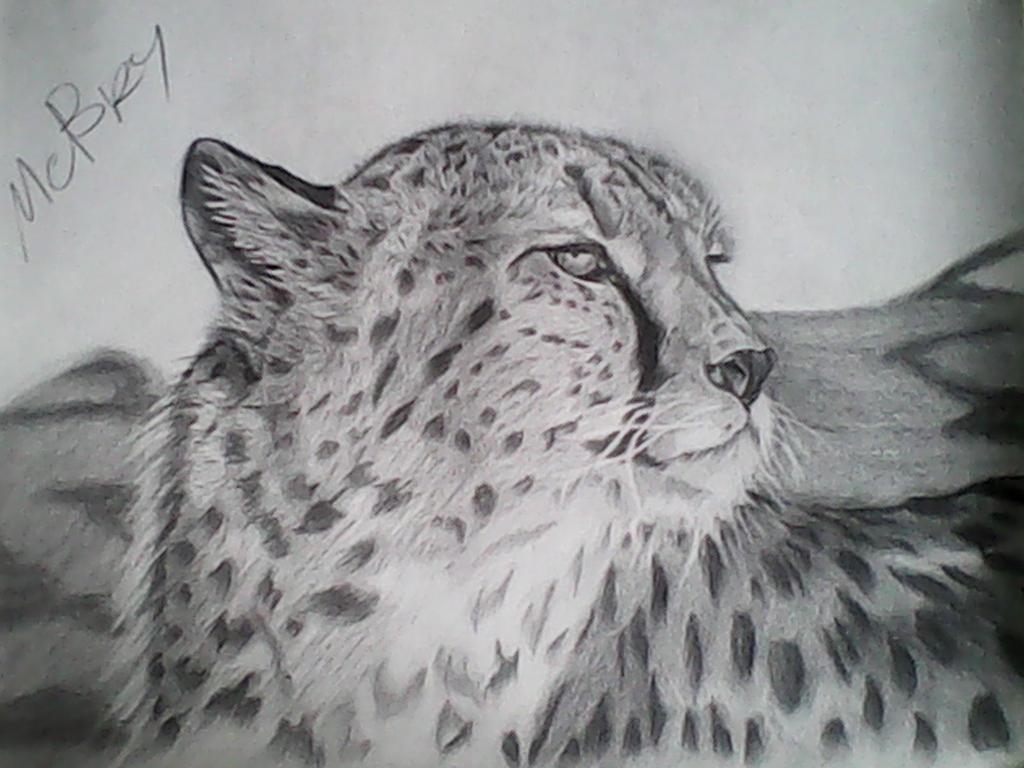 Cheetah by michaelbryan