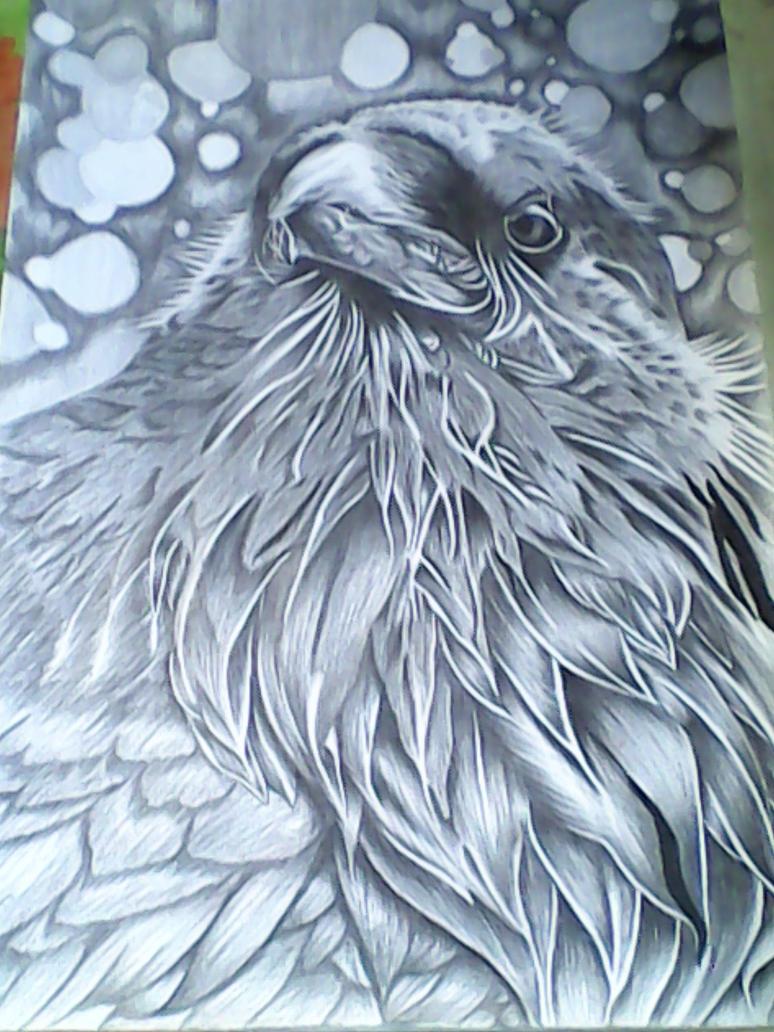 Raven Sketch by michaelbryan