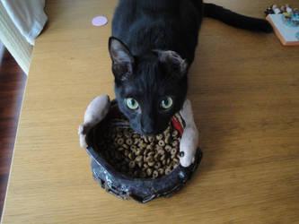 Food bowl 3