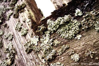 Olde Wood by iia02dennisg