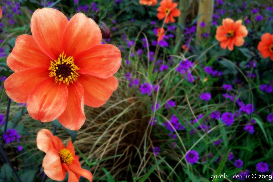 Flower of Red, Flower of Blue by iia02dennisg